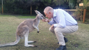 DC and kangaroo